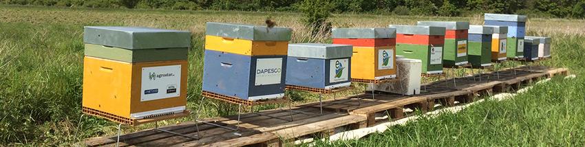 Parrainer une ruche pour soutenir les abeilles dans la pollinisation